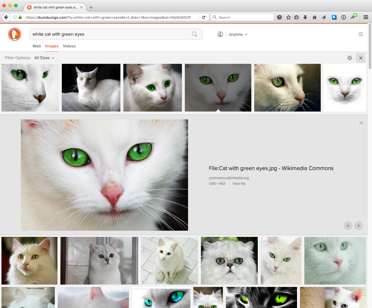 duckduckgo-white-cat-image-search