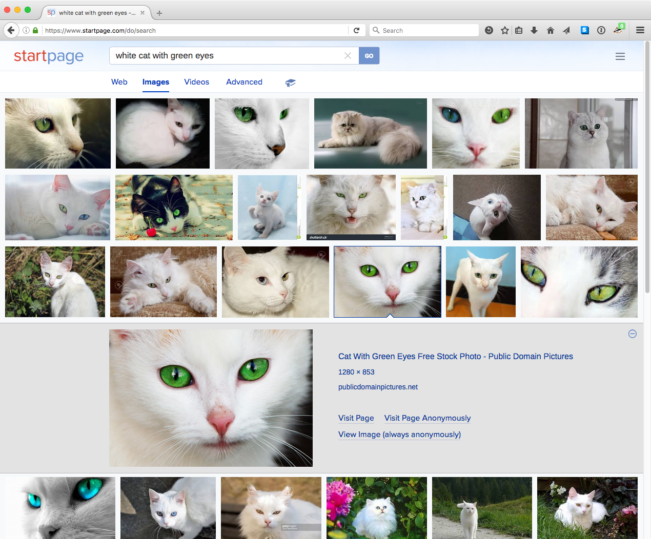 startpage-white-cat-image-search